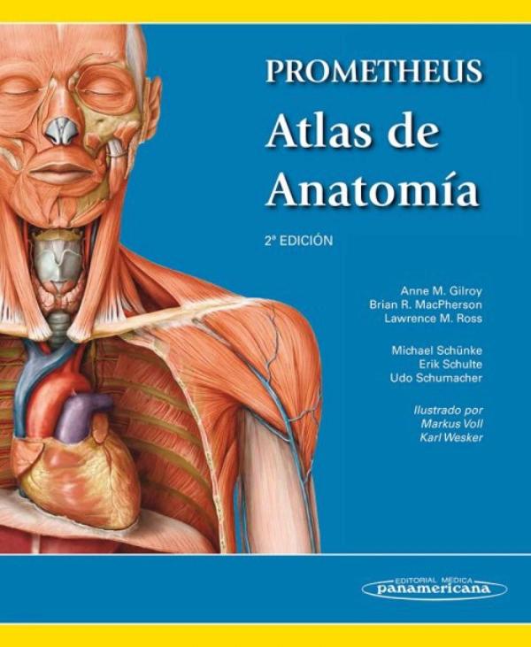 Excelente Anatomía Marieb Y Edición 10 De La Fisiología Ornamento ...