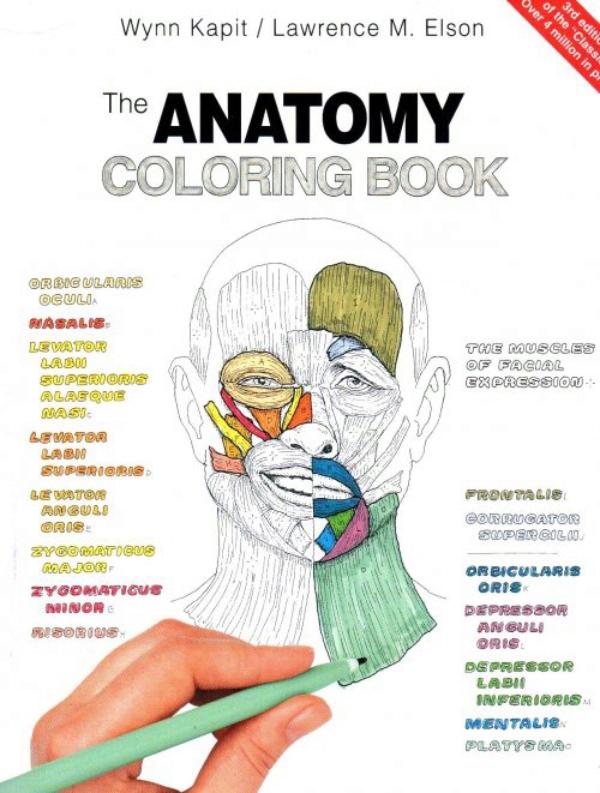 Excelente Libro Para Colorear De Anatomía Pdf Imágenes - Dibujos ...