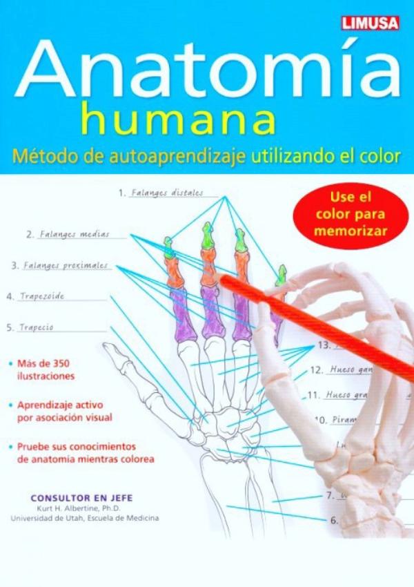 Albertine. Anatomia humana