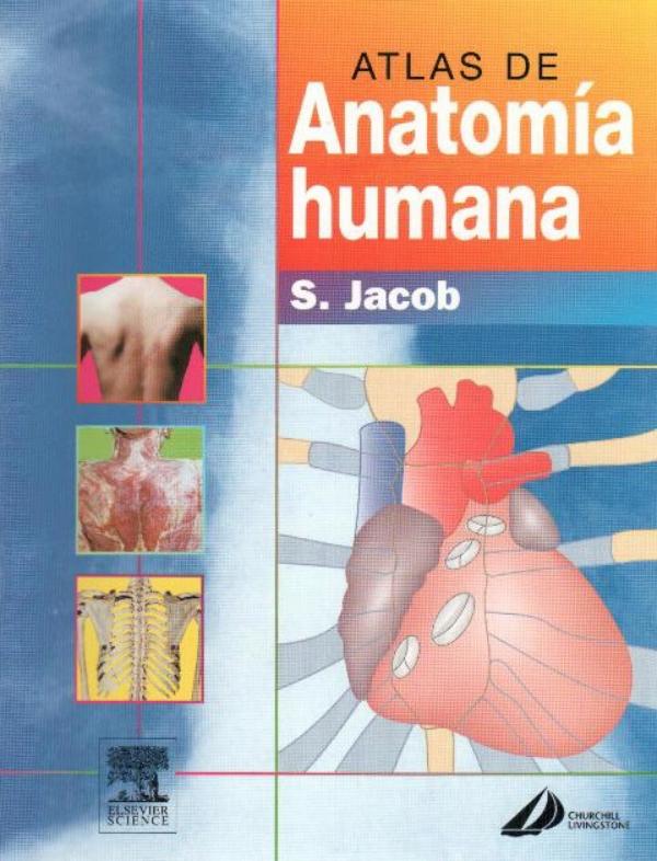 La anatomia macroscopica es una de las materias mas importantes en ...
