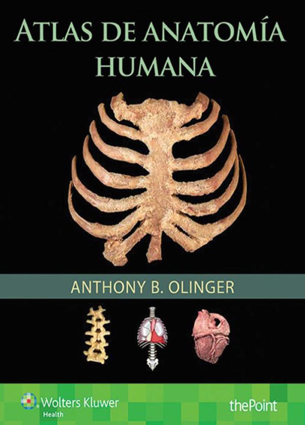 Olinger. Atlas de anatomia humana