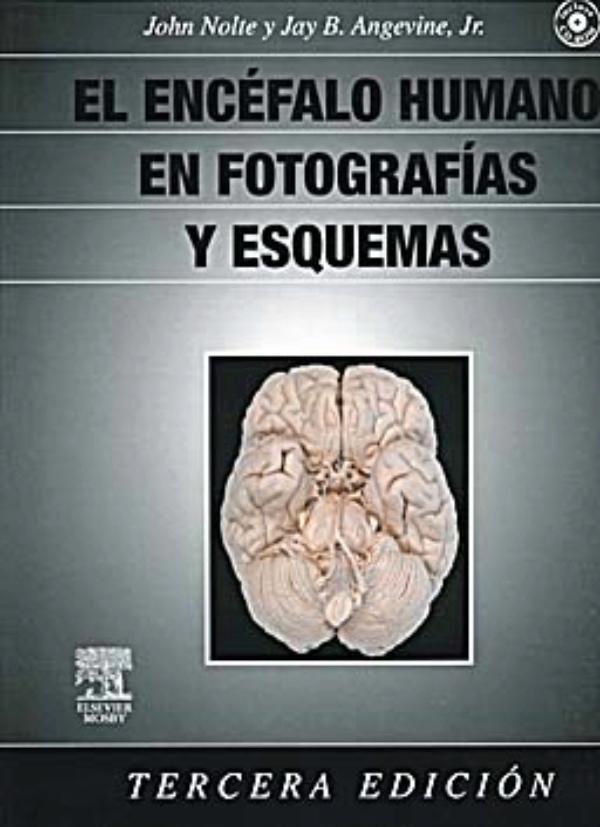 El encefalo humano en fotografias y esquemas gratis