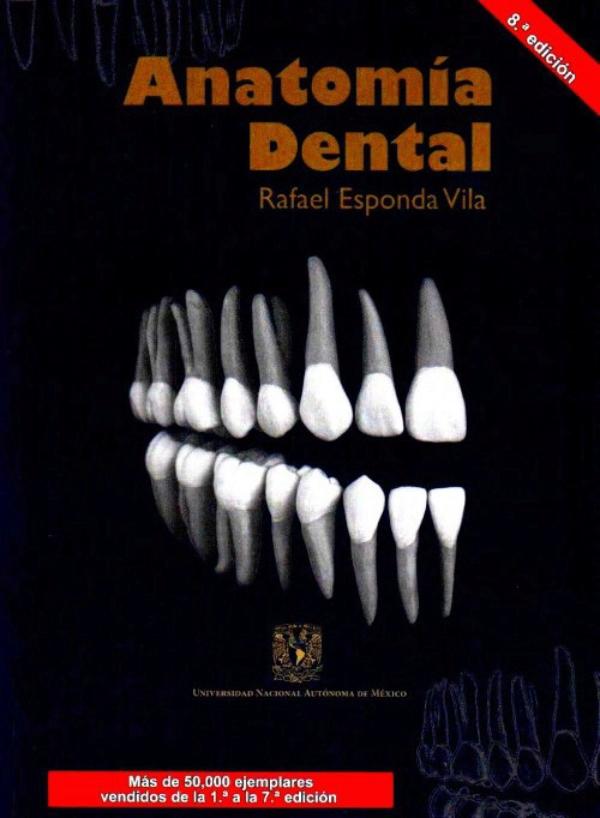 Vistoso Prueba De La Anatomía Dental Composición - Imágenes de ...