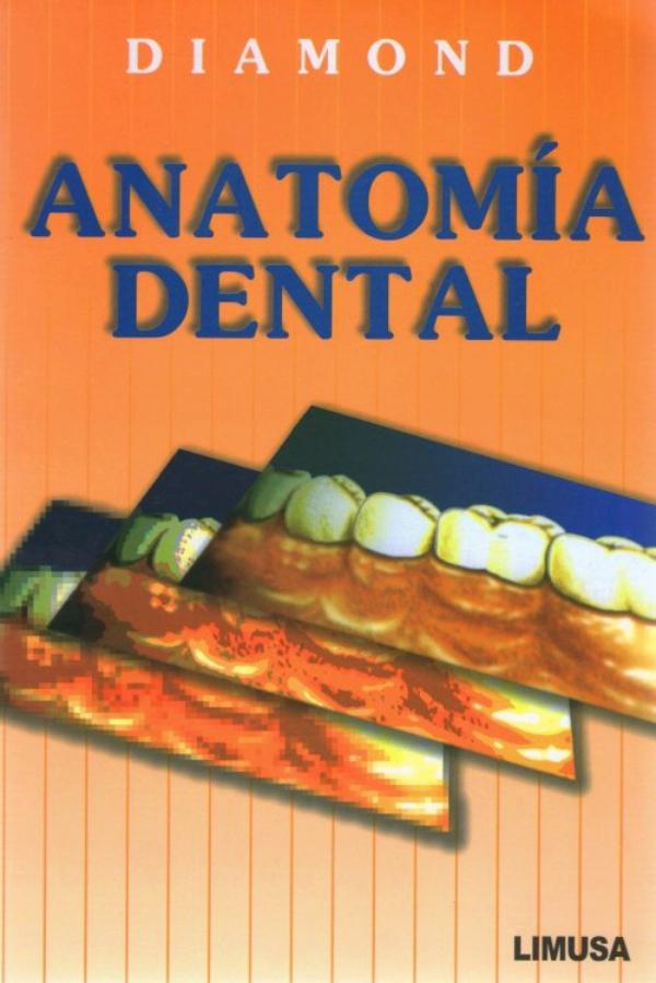 Diamond. Anatomia dental