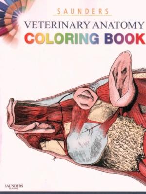 Veterinary anatomy book saunders coloring pdf